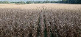 Consorcio Agrosur reforzará producción de 20 rubros prioritarios