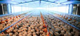 Ejecutivo nacional fortalece producción nacional de alimentos